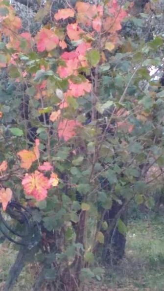 L'autunno a Corchiano.Le caratteristiche della stagione autunnale nella cittadina Falisca