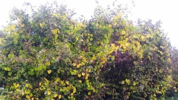 L'autunno a Corchiano. Le caratteristiche della stagione autunnale nella cittadina Falisca