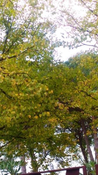 L'autunno a Corchiano. Le caratteristiche della stagione autunnale nella cittadina Falisca.