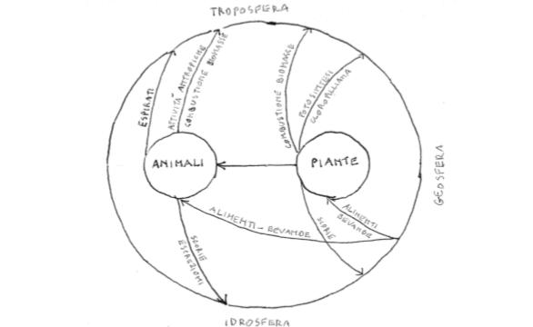 Figura 4. La biosfera (piante-animali)