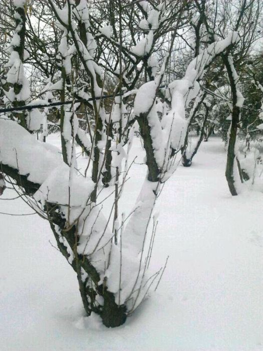 Corchiano sotto una spessa coltre di neve